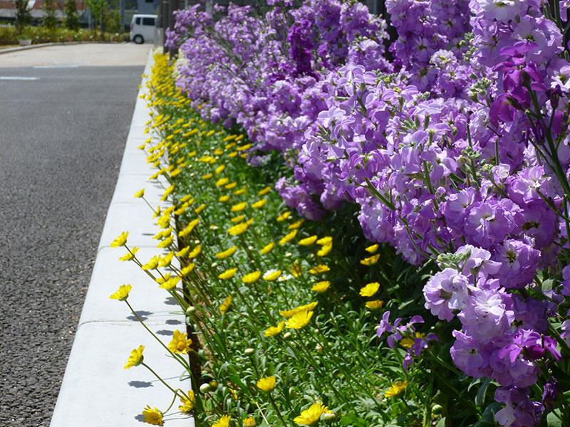 救護施設つばき施設の花壇(花の育成)